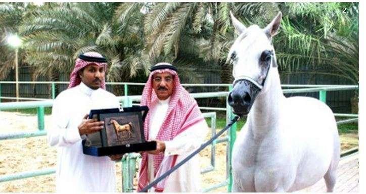 Un Famoso Caballo Será Ejecutado Por Homosexual En Arabia Saudita