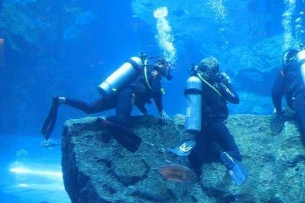 Imagen del acuario del Dubai Mall.