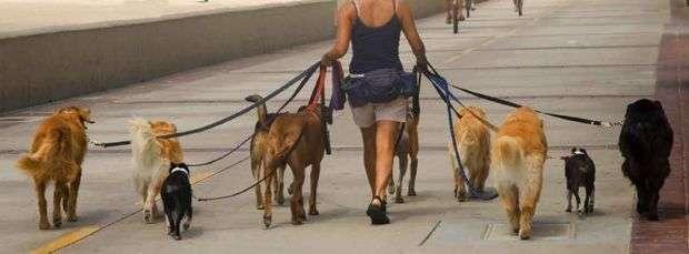 Los perros en la ciudad de Dubai deben pasear con correa.
