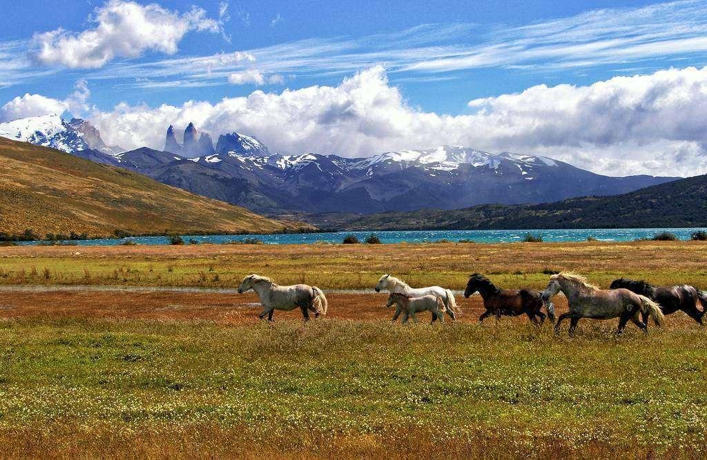 Chile se ha destacado mundialmente por la calidad e inocuidad de sus productos alimenticios. (Fuente externa)