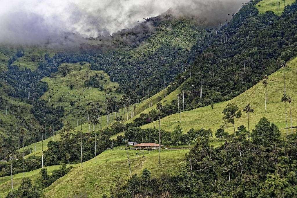 El pabellón colombiano realizará semanas temáticas enfocadas en las flores, la moda, las frutas, el café, el cacao y los cárnicos. (Fuente externa)
