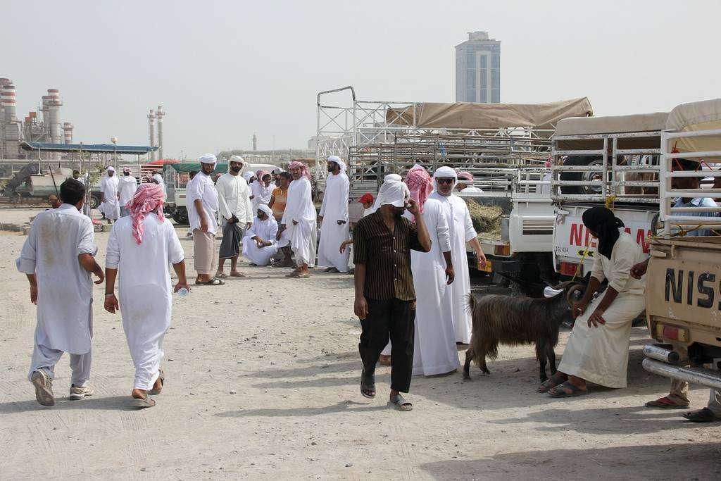 Mercado de corderos en Ras al Khaimah con motivo del Eid Al Adha. (EL CORREO)